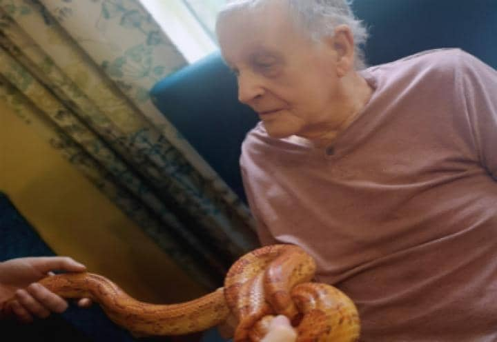 Resident handling a snake during a recent visit from ZooLab