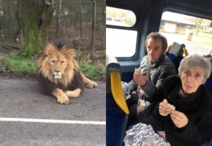 Left: Lion at Knowsley Safari Park - Right: Residents from Langfield Care Home enjoying their coach trip.