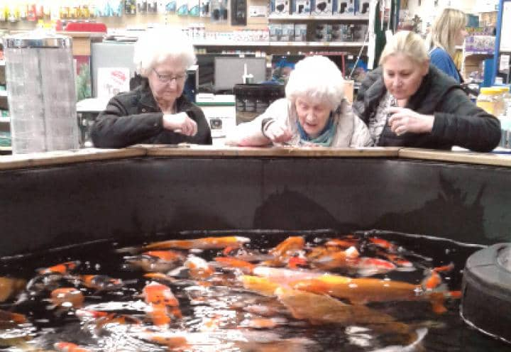 residents looking at the fish.